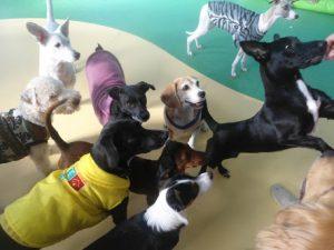 Pet Shop Cidade Líder SP